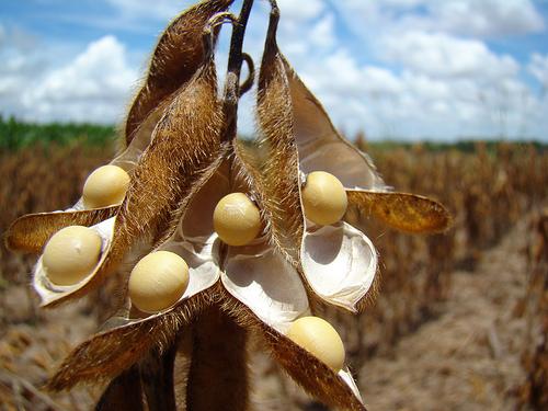 La soja en Rosario est� en el menor valor desde enero de 2002