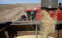 La soja baj� m�s de 7% en 20 d�as y resta US$ 1.500 millones al valor de la cosecha local